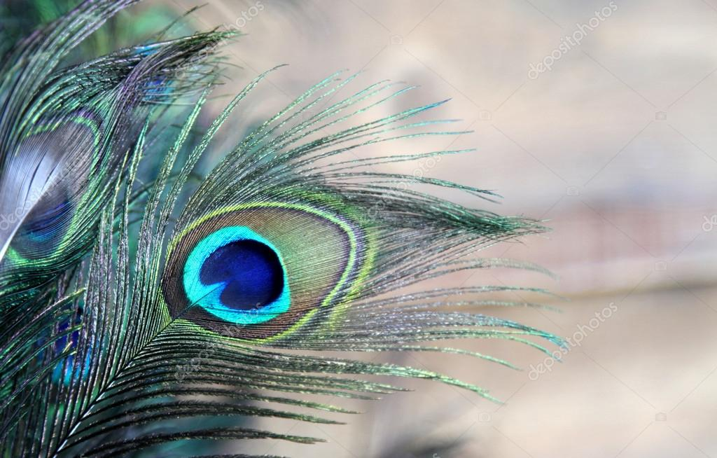 Peacock feather eye in blue and green