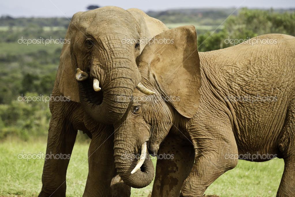 Elephant games — Stock Photo © bondsza #48092371 Elephant Games