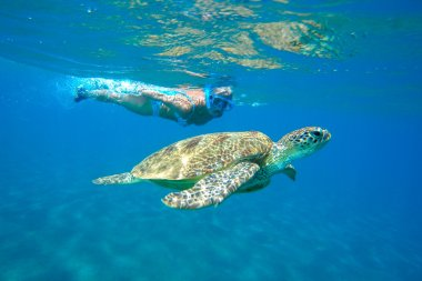 Green Sea Turtle  with snorkeling woman