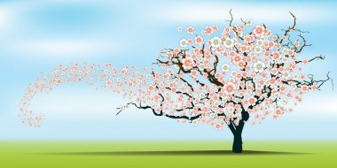 Spring wind rips cherry blossom tree. Vector.