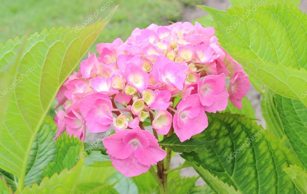 Pink flowers on green leaves background