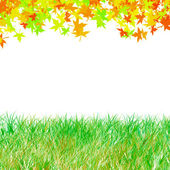 Autumn maple leaves with green grass