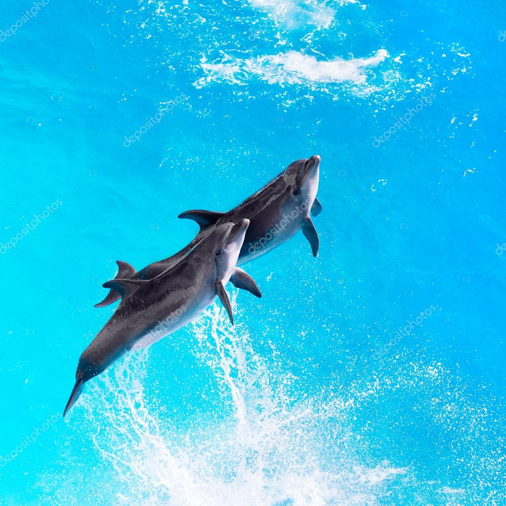 Dolphins jump out of the clear blue water of the pool closeup