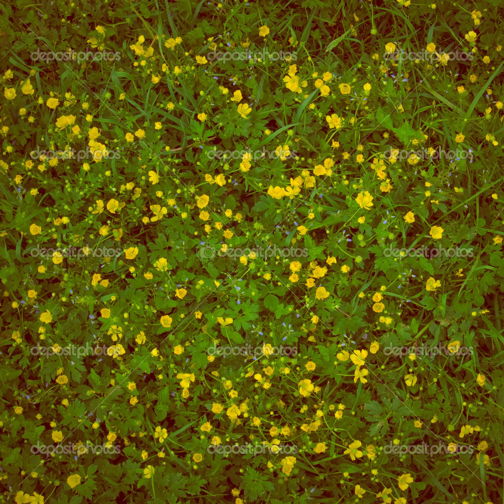 Natural background of green grass with small yellow flowers stock natural background of green grass with small yellow flowers stock photo mightylinksfo
