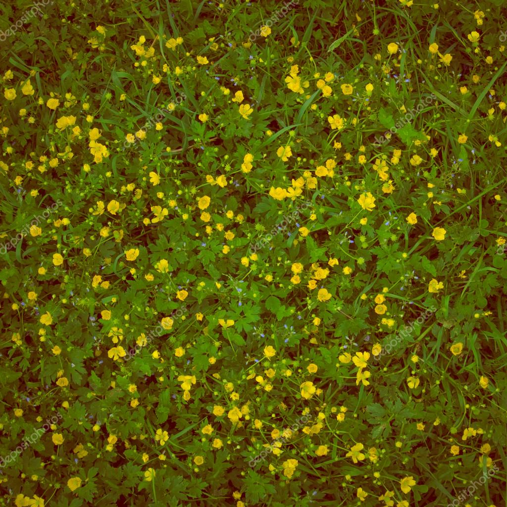 Natural Background Of Green Grass With Small Yellow Flowers Stock
