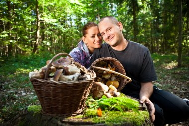 Couple picking mushrooms in the forest
