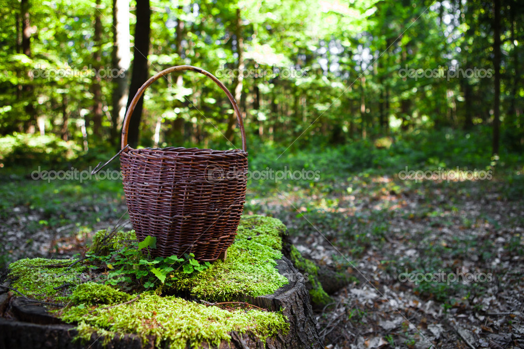 Basket for mushrooms in the woods