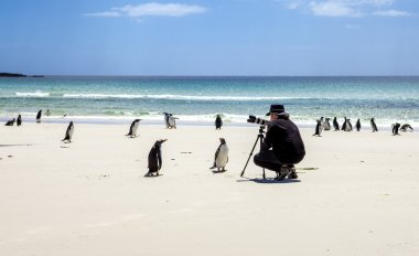 Photographer with penguins at Falkland Islands-2