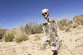 Skelton s vodou v poušti