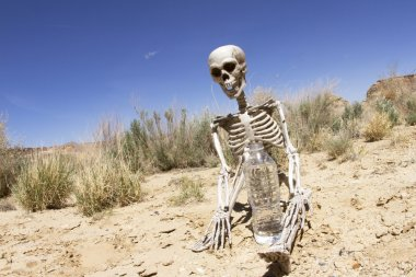 Skelton with Water in Desert