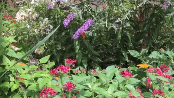 Butterfly zahrada