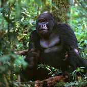 Photo Gorilla sitting under tree