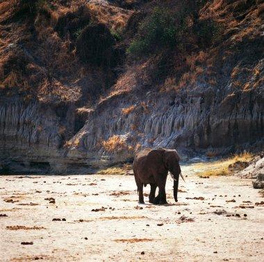 Elephant in Gabon desert