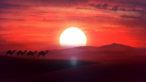 Camel train travels across a desert in the sunset. HD