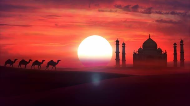 Karavana putuje přes poušť v západu slunce. HD