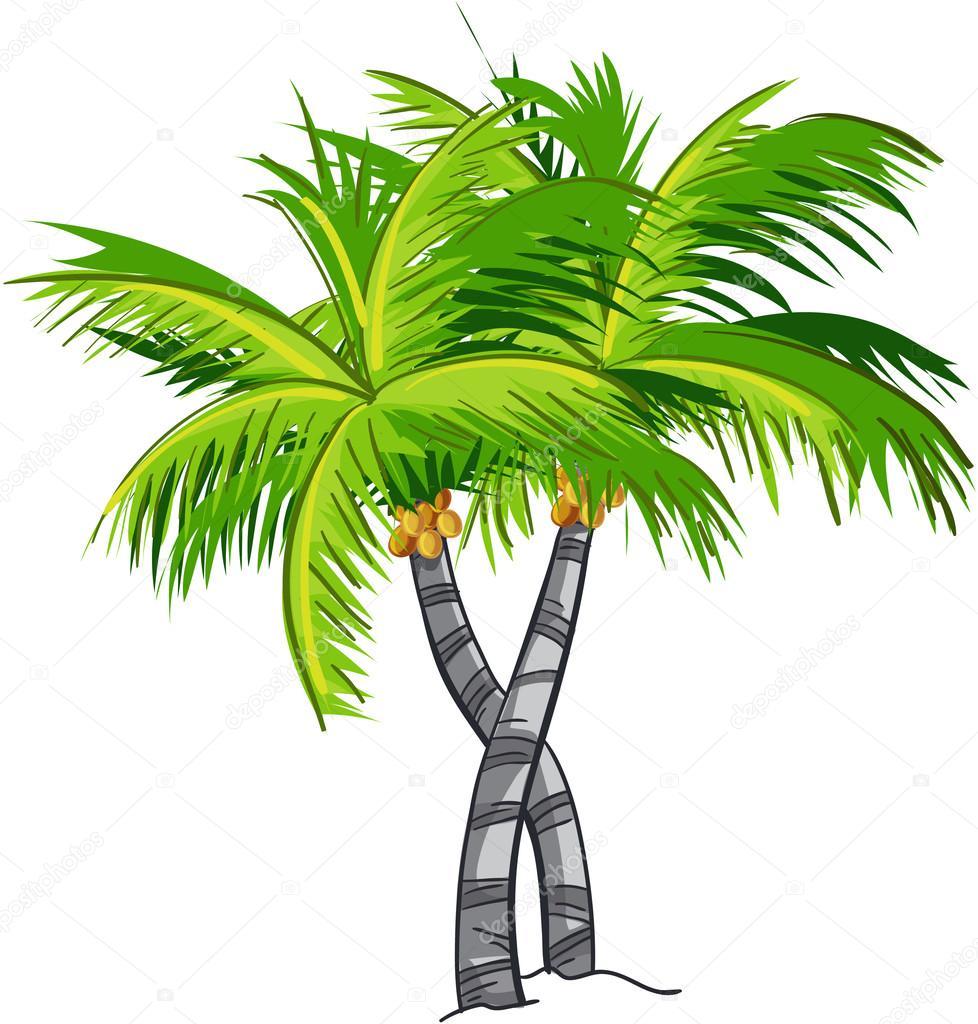 Cocotier de dessin anim image vectorielle nearbirds - Palmier cocotier ...
