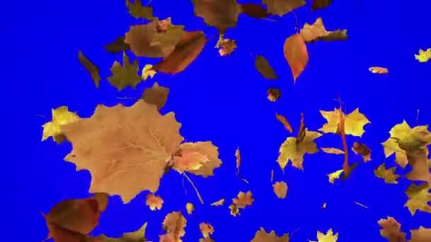 fallende Blätter mit Chroma-Schlüssel