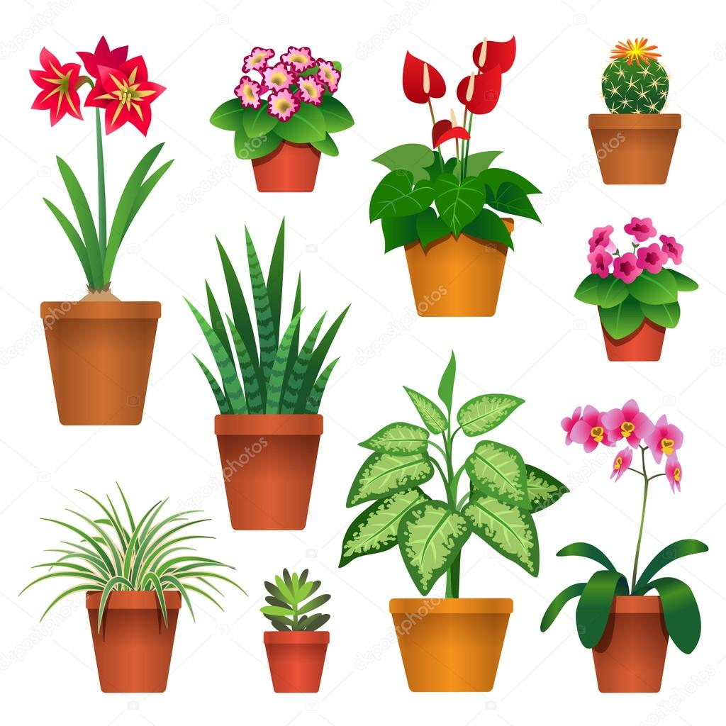 Houseplants in pots