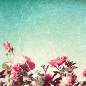 růže na retro zelené pozadí
