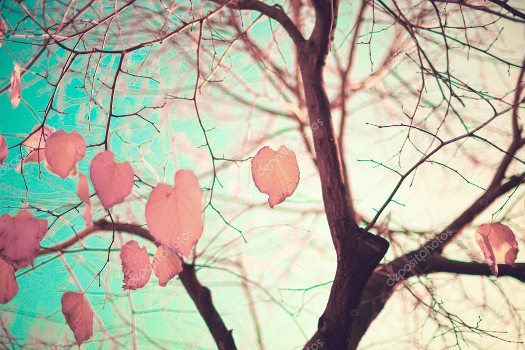 Heart-shaped Autumn Leafs
