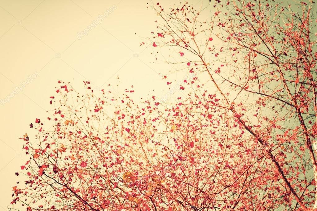 Pastel red autumn leafs