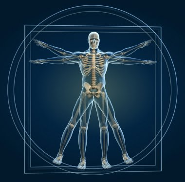Body and skeleton in vitruvian man