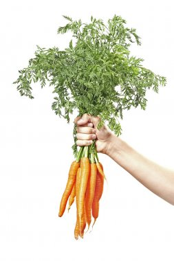 Hand holding raw fresh carrots isolated on white stock vector