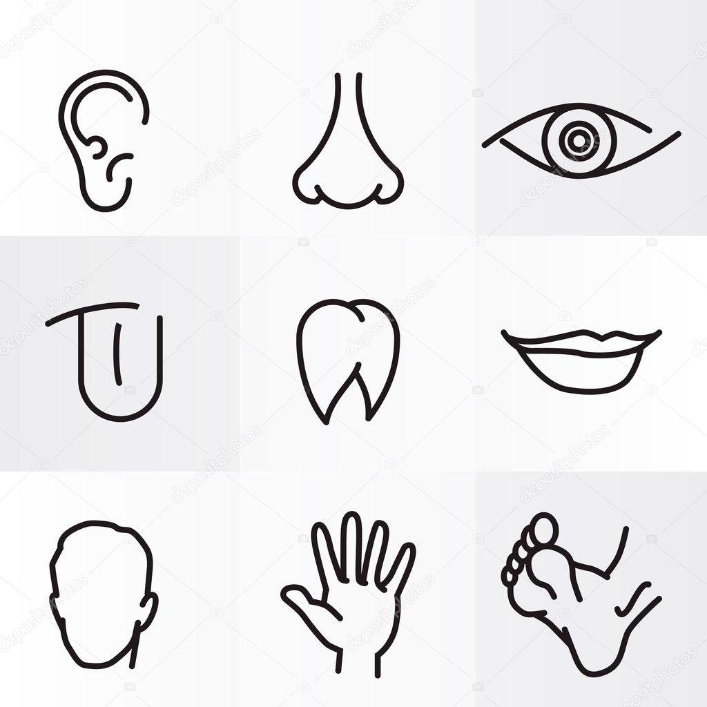 Satz von Vektor Symbole menschlicher Körperteile — Stockvektor ...