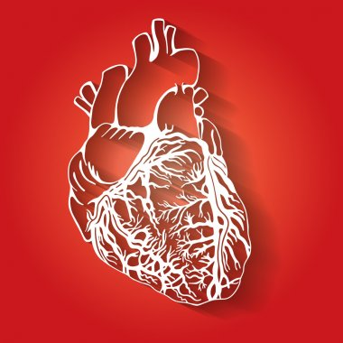 Stylized heart, medical sketch illustration, hand drawn artwork, flat icon style, isolated element on red background