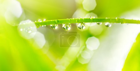 Water drops on a green stem
