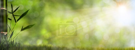 Abstract misty natural backgrounds