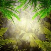 Brzy ráno v tropickém lese