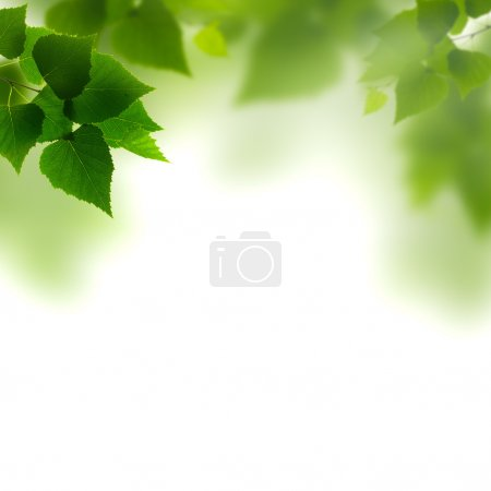 Summer foliage against white backgrounds