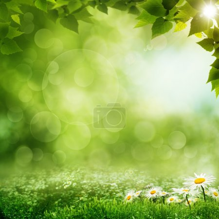 Photo for Beauty morning in the green forest, eco backgrounds - Royalty Free Image