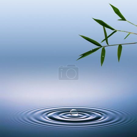 Abstract environmental backgrounds with bamboo and water droplet