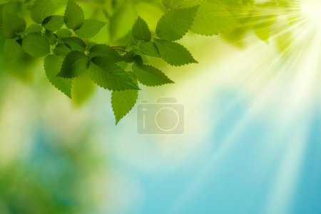 Beauty Summer Day. Abstract environmental backgrounds