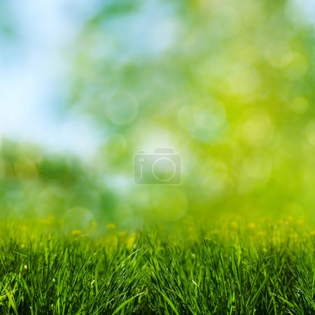 Green grass on the meadow, environmental backgrounds