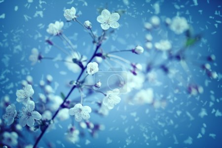 Snow and flowers.