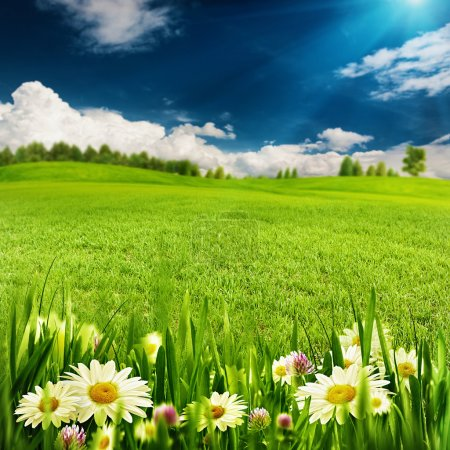 Summer time,  environmental backgrounds
