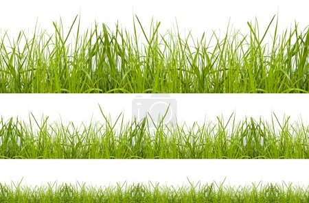 Photo for Green grass isolation on the white backgrounds - Royalty Free Image