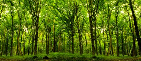 Photo for Forest trees. nature green wood sunlight backgrounds. - Royalty Free Image
