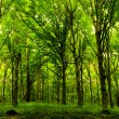 Forest trees. nature green wood sunlight backgroun...