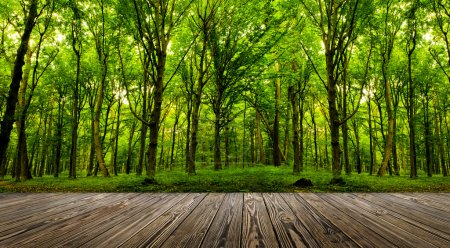 Photo for Wood textured backgrounds in a room interior on the forest backgrounds - Royalty Free Image
