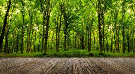 Photo pour Arrière-plans texturées bois dans un intérieur de chambre sur le fond de la forêt - image libre de droit