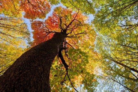 Autumn forest trees. nature green wood sunlight ba...