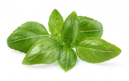 Photo for Basil leaves - Royalty Free Image
