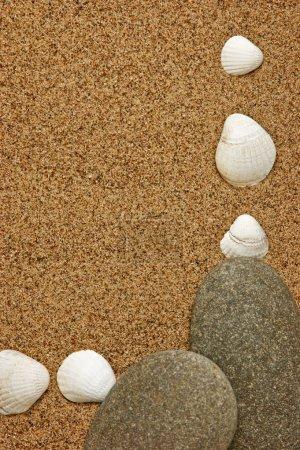 Frame of sea shells on the sandy beach