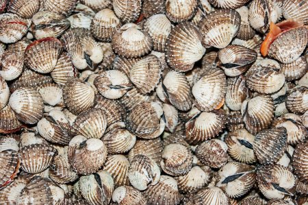 Pile of seashells background