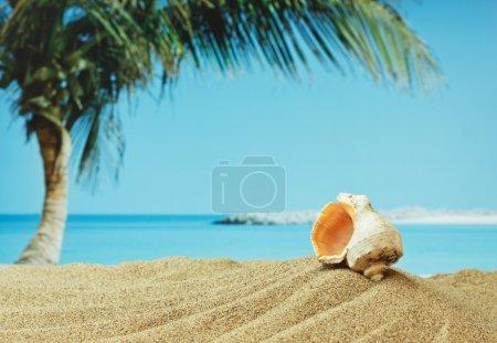 seashell on sandy beach on the tropical coast