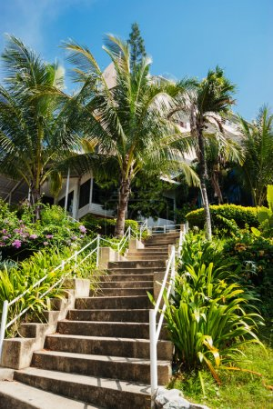 Stone stairs in a tropical garden
